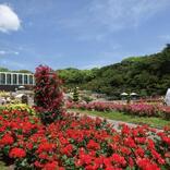 春に行くべき「お花の絶景スポット」5選! バラ・チューリップ・菜の花が咲き誇る♪【兵庫】