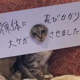 脱衣所で大惨事! 猫がやらかした事実に思わず痛くなる……
