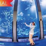 ビッケブランカ、新SG『ポニーテイル』全貌明らかに 収録ライブ映像より「Ca Va?」公開