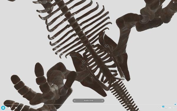 トリケラトプスの全身骨格を真下から眺める (ホームページより引用:国立科学博物館・凸版印刷株式会社)