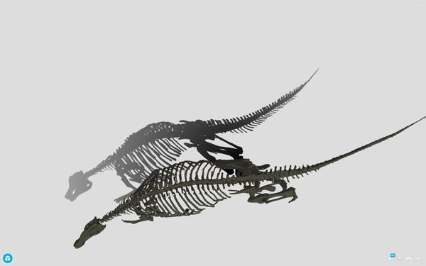 ニッポノサウルスはデジタルデータの影も美しい (ホームページより引用:北海道大学総合博物館)