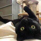 手の脱力感がたまらん黒猫 「手をぶるぶるさせたい」