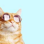2月22日は「猫の日」!「猫」にまつわるドラマを観て癒されちゃおう♡