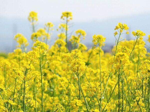 春の穏やかな陽射しを表した言葉「春うらら」