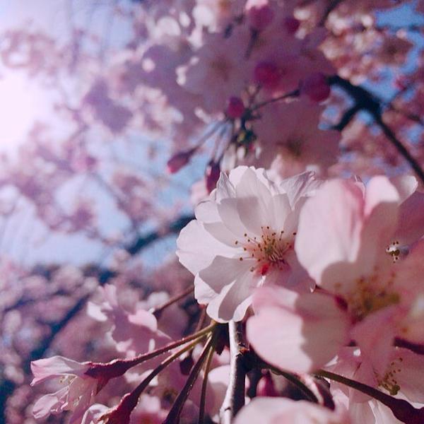 春らしい時期を表した言葉「春たけなわ」