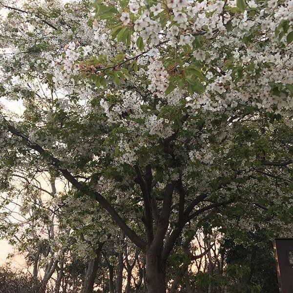 もう少しで春が終わることを表した言葉「暮春」