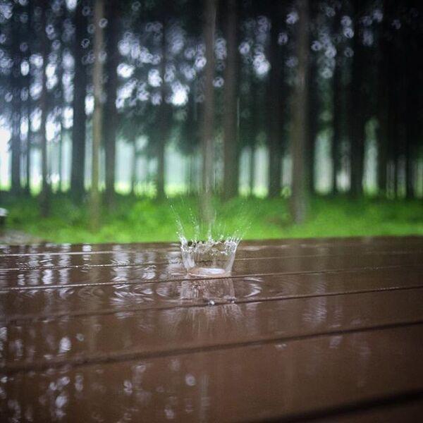 降っては止む春の雨を表した言葉「春時雨」