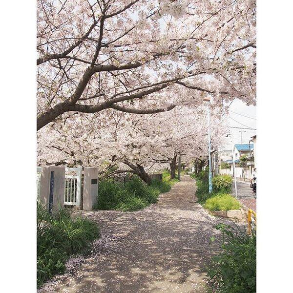 春に吹く穏やかな風を表した言葉「春風」