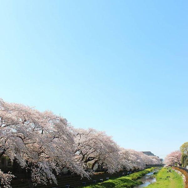 ぼんやりとかすむ春の空を表した言葉「春霞」