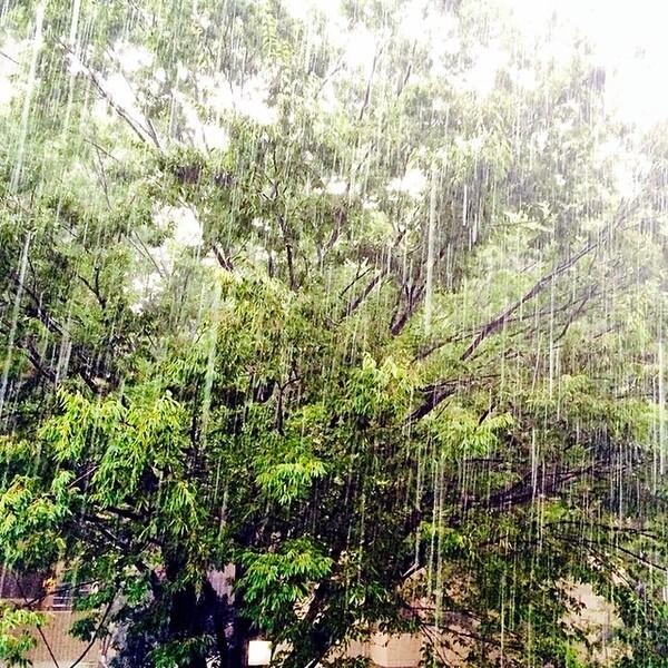春の雷を表した言葉「初雷」