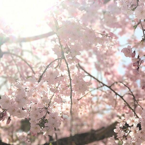 強く光る陽射しに春風が輝く様を表した言葉「風光る」