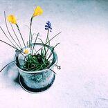 春をイメージさせる綺麗な言葉まとめ。挨拶にも使える素敵な言葉で季節を感じよう