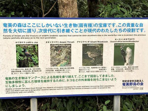 原生林散策スタート