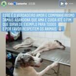 事故で怪我をした仲間に一晩中寄り添う犬、治療中も離れず(ブラジル)<動画あり>