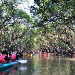 【奄美大島】豊かなマングローブの森をカヌーで探索「黒潮の森 マングローブパーク」