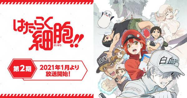 TVアニメ「はたらく細胞!!」