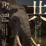 劇団さんらんが絶滅の危機にあるアフリカゾウをテーマにゾウと共に生きる人々を描く『共生』を上演