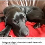 2匹の犬に襲われた盲目の女性、盲導犬がケガをしながらも追い払う(英)
