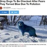 体毛が青や緑に染まった野犬が発見される 化学汚染の影響か(露)