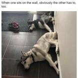 「ウチの犬どうしちゃったの?」飼い主さんを戸惑わせるワンコたち 5選