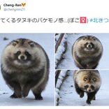 バケモノ感…!? まんまるタヌキの写真がTwitterで話題「重量感ある」「抱きしめたい」の声