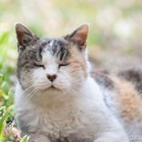 ロート製薬の発表に歓喜 「猫好きにはたまらない」「商品化ありがとう!」