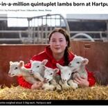 100万分の1の確率で五つ子の羊が誕生 14年勤める飼育員も「見た事がない」と驚き(英)