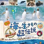 NHK人気自然番組「ダーウィンが来た!」劇場版 第3弾『驚き!海の生き物超伝説 劇場版ダーウィンが来た!』全国ロードショー決定!