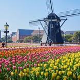 「ハウステンボス」という名のチューリップが一面に広がる花畑が初登場、「100万本のチューリップ祭」スペシャルウィーク開催