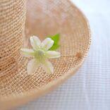 和名が美しい花16選。意外と知らない日本ならではの綺麗な呼び名をご紹介