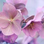 縁起のいいお花を集めました。和~洋まで飾るだけで幸せになれそうな花々をご紹介