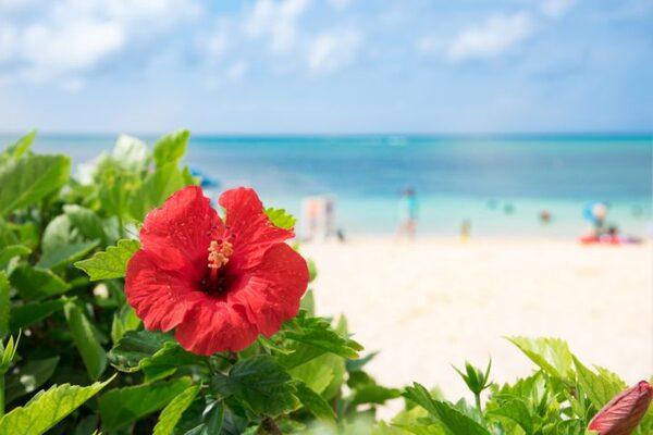 新婚旅行の定番!南国の海を味わえる「沖縄」