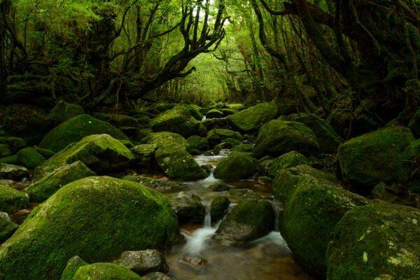神秘的な自然を体験するなら「屋久島」