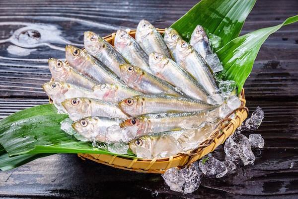 ままかり(サッパ)ニシン科の小魚