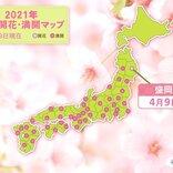 盛岡 統計開始以来 最も早い桜開花 「積雪」の後に「桜」の便り