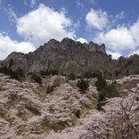 今週末、見頃を迎える桜スポットまとめ【2021年4月10日~】