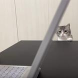 猫動画を見ている飼い主に嫉妬した愛猫、とった行動に反響