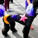 愛犬のトリミングを競う米国の人気番組 奇抜な毛染めが「動物虐待」と批判殺到