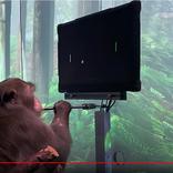 イーロン・マスク氏、ついに思念でゲームをプレイする猿を作りだす