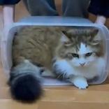 「箱!返せぇー」もふもふ執念の追尾 没収されまいと何処までも追いかける猫、後ろ足を小刻みに動かし全力で追いかける