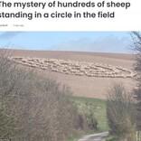 いつもは騒がしいはずの羊の群れ 静まり返って謎のサークルを作りだす(英)