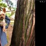 家に侵入した野生のクマ 小さくて優秀な番犬2匹に威嚇されて走り去る(米)<動画あり>