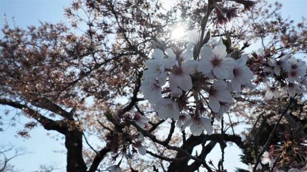 花びらUP