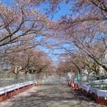 1本の木に会いに行く(27)原発事故から10年 富岡町・夜ノ森桜並木<福島県>