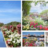 ハウステンボスが100万本のバラに包まれる『バラ祭』開催