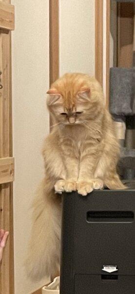 洗面所に閉じ込められ心底凹む猫