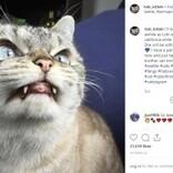"""""""吸血鬼""""や""""悪魔""""と呼ばれる強面すぎる猫たち フォロワー数49万人超の人気者も"""