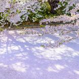 今週末、見頃を迎える桜スポットまとめ【2021年4月24日~】
