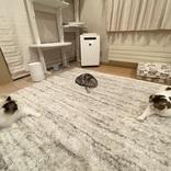 3匹の猫が「何か」をしているようすに想像かき立てられる 儀式?それともデュエル?