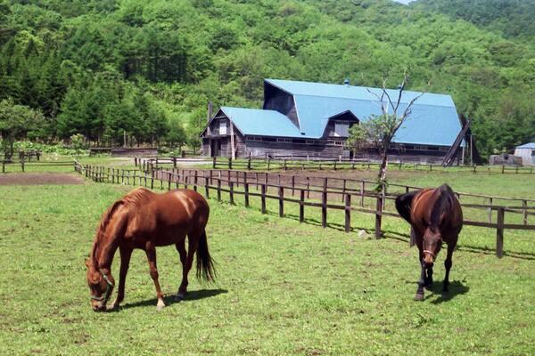 生産牧場の一例(ライスシャワーの生まれ故郷:登別市ユートピア牧場)